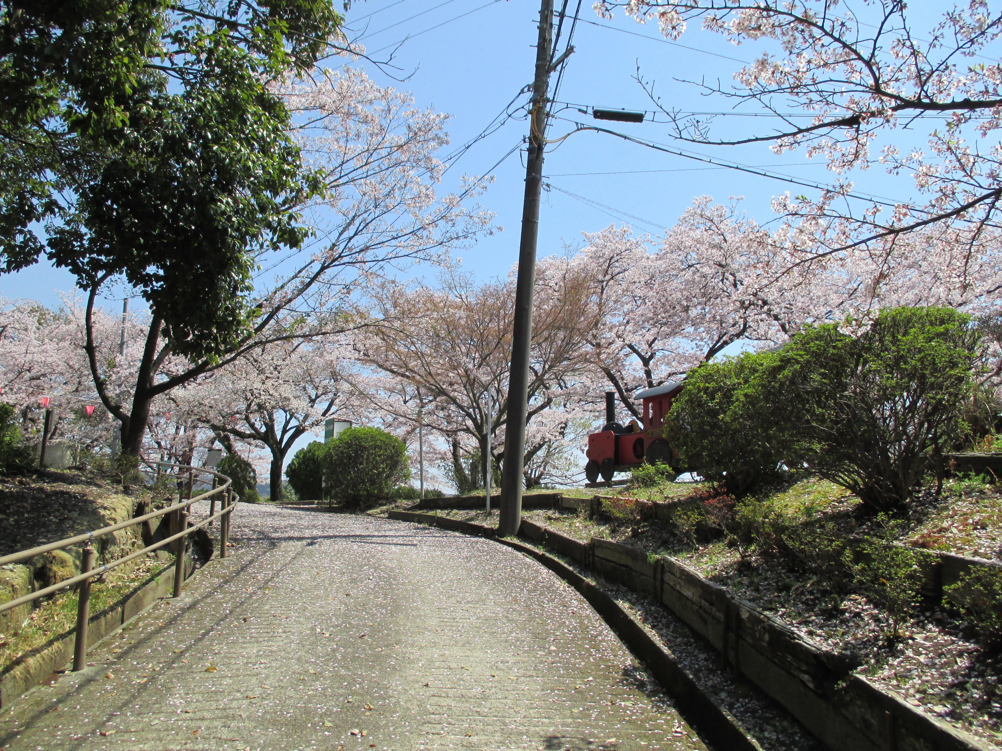 http://www.city.kashiwara.osaka.jp/_files/00184571/sakura14.jpg