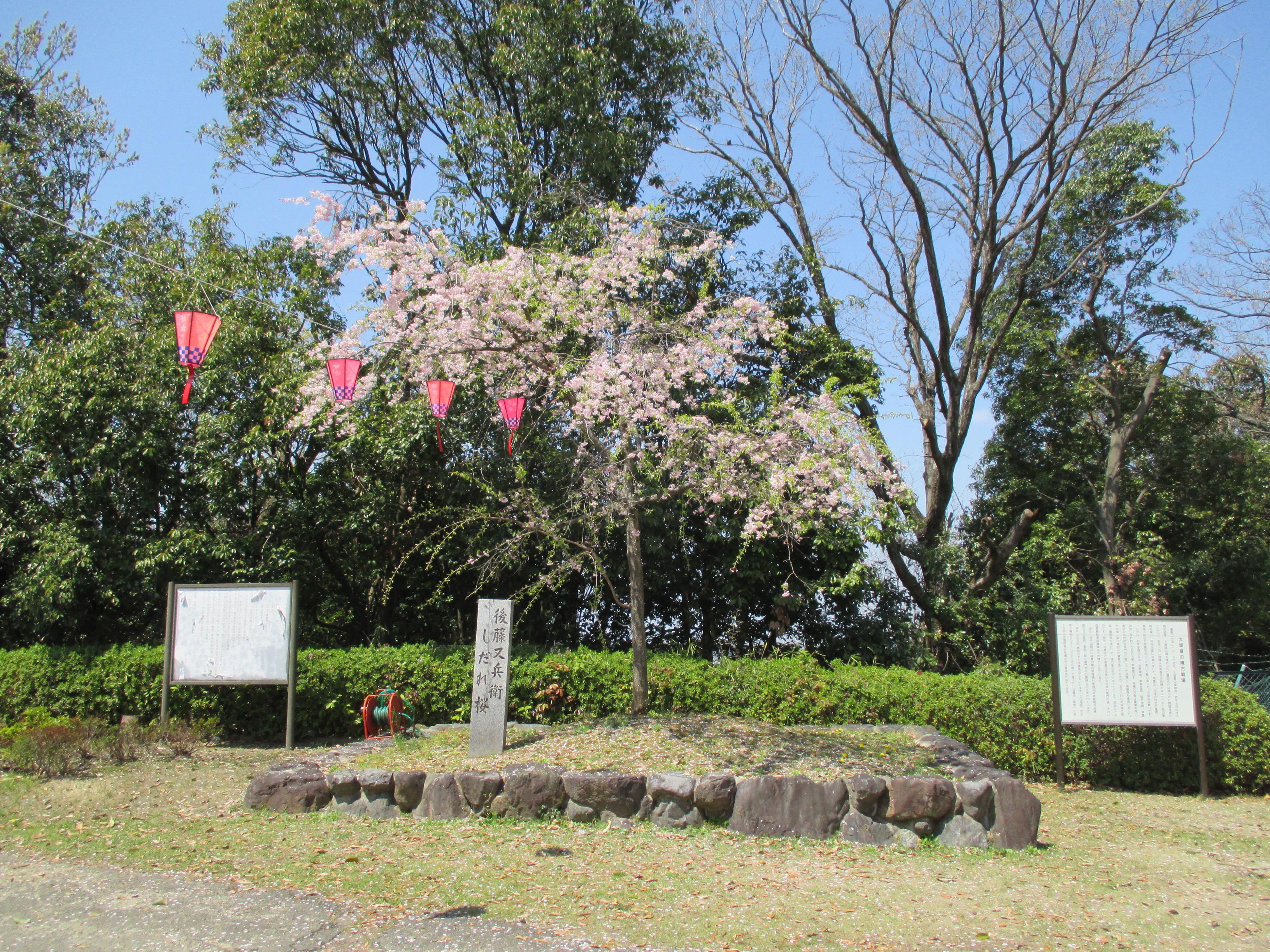 http://www.city.kashiwara.osaka.jp/_files/00184588/sakura15.jpg