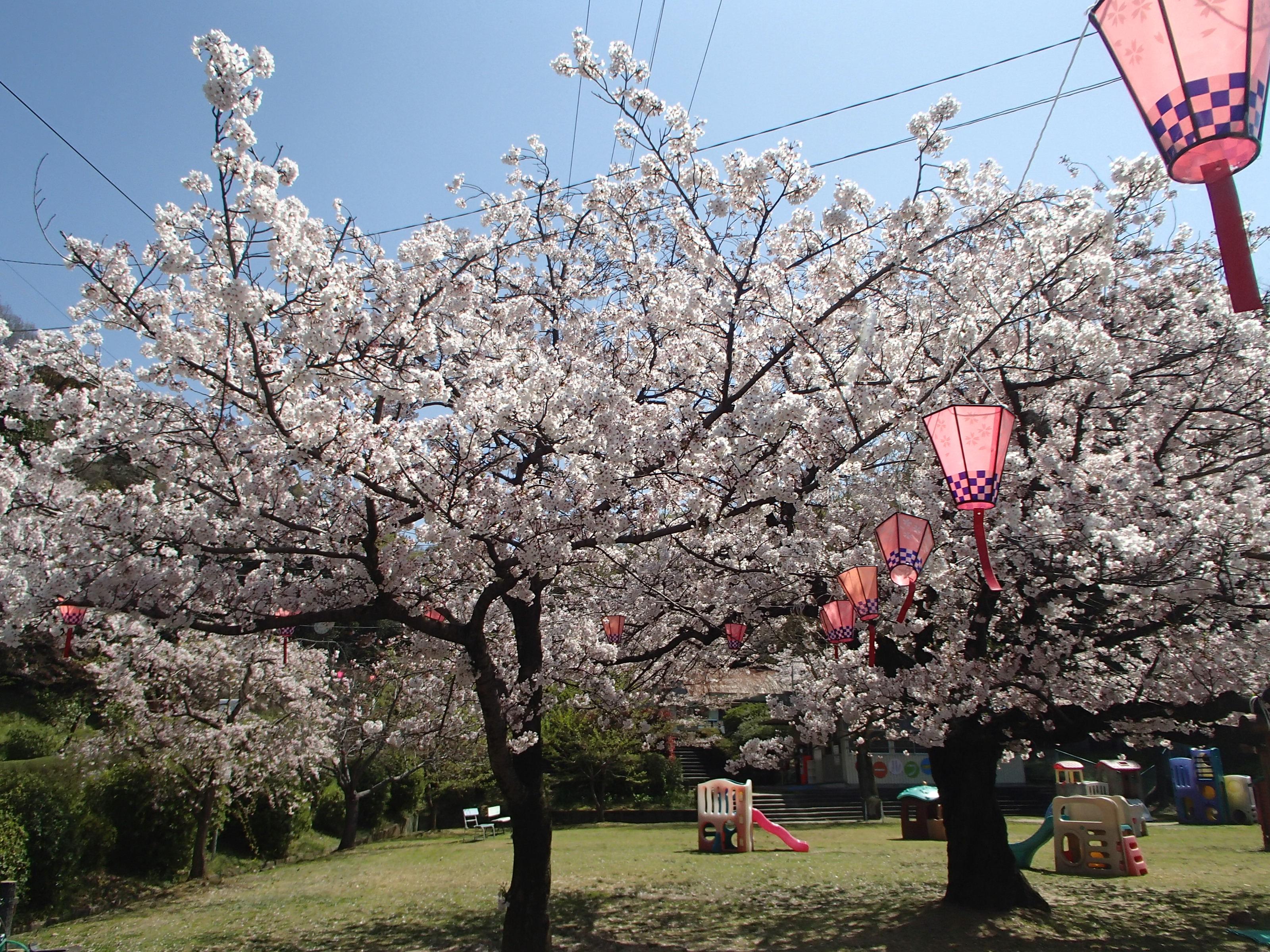 http://www.city.kashiwara.osaka.jp/_files/00184649/sakura17.jpg
