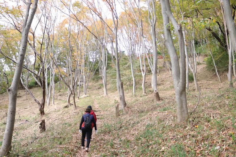 高尾山創造の森の写真