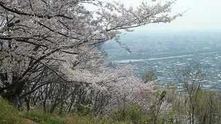 創造の森の桜01